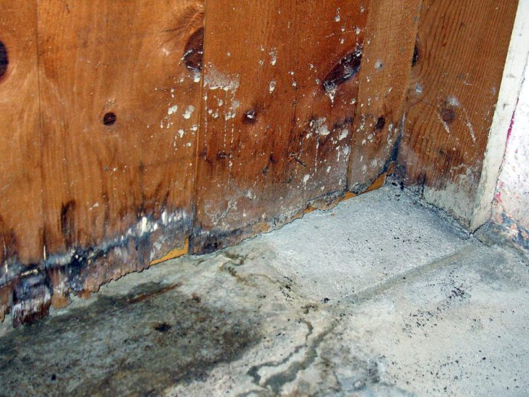 A wall in need of mold removal services in Kauai, HI